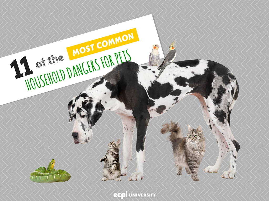 Most Common Household Dangers for Pets