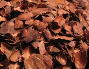 cocoa mulch